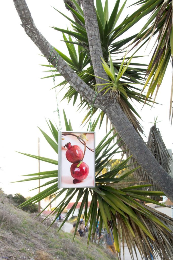 Arden Surdam, Paired pomegranate, 2017