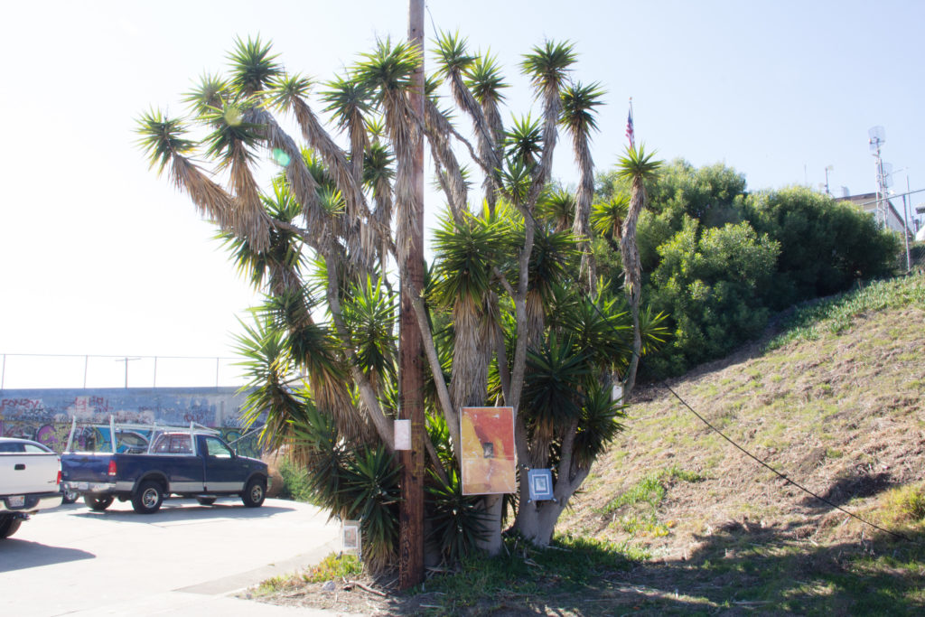 Yucca, installation view